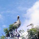 Ranganthittu Bird Sanctuary
