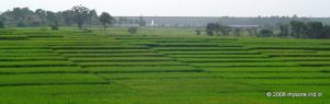 Mysore region is one of the fertile and well irrigated area in this part of the country