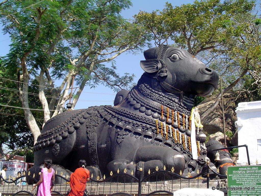 This giant image of Nandi of Mysore (Bull) is located at the top of Chamundi hills in Mysore. More than 350 years old, this is one of the oldest icons in Mysore.