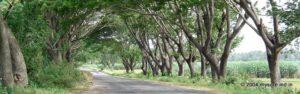 Mysore to Shravanabelagola