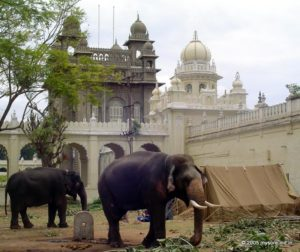 Dasara Elephants