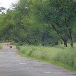 Mysore to Somnathpur