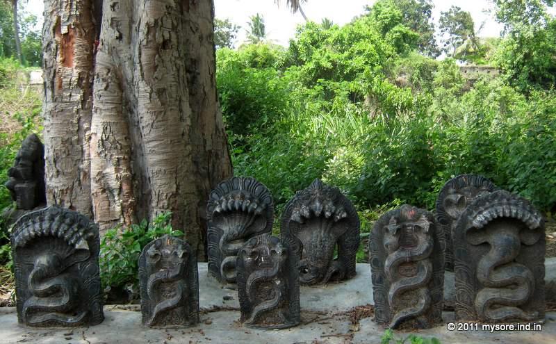 Snake shrines on the banks of River Cauvery in Srirangapatna